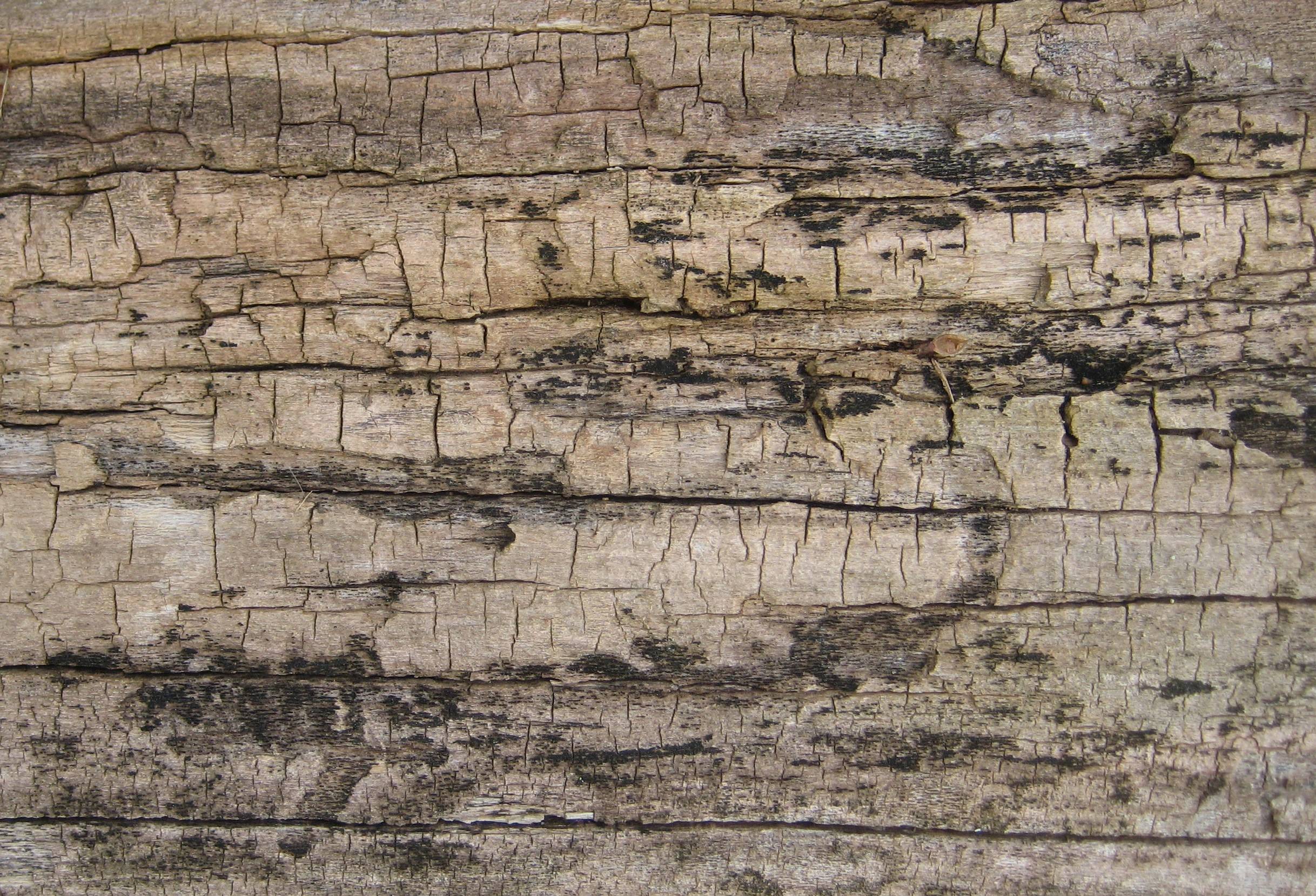 Log Wallpaper With The Texture Of Logs ~ Log cabin wall joy studio design gallery best
