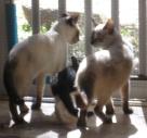 k2 trio II