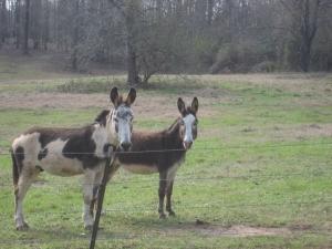 GKP donkeys