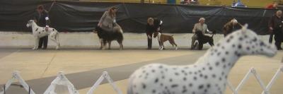 SP dog show line