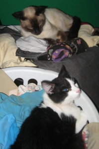 When you have lots of cats, it's good to have lots of laundry.