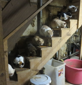 Rodney's Saga cats on stairs