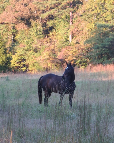Rodney's Saga grazing