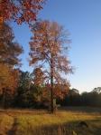 tree Nov 12 2013