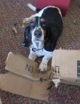Dash Dog of Destruction