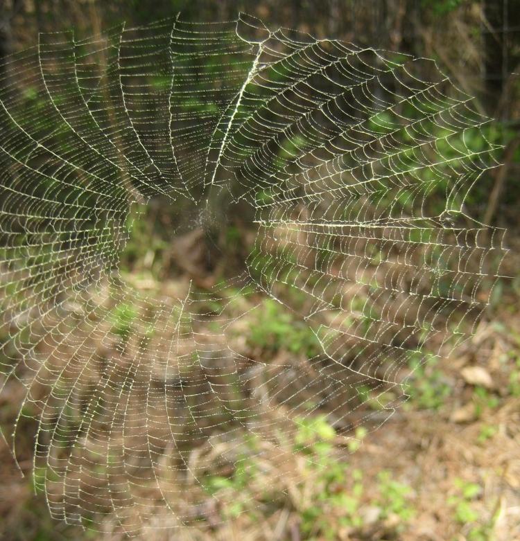 FoFri web with pollen