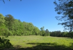 pasture April 25 2014