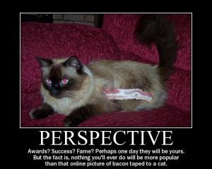 perspectivecatbig