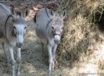 Rocking S donkey