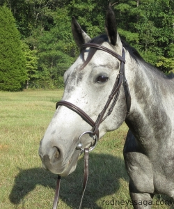 Milton bridle Aug 29 2014 1