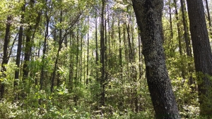 GpastureP greenery & trunks wp