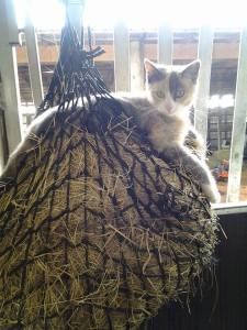 Kitty Kitty. Photo by Janice Palmer-Williams.