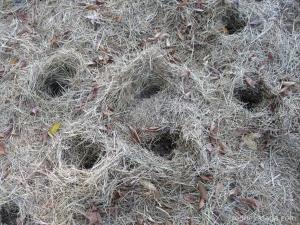hay holes