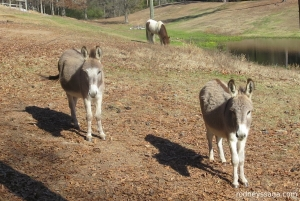 Rocking S Dec 2014 donkeys