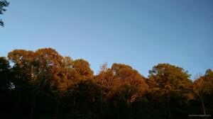 sunset 10 19 14 wm