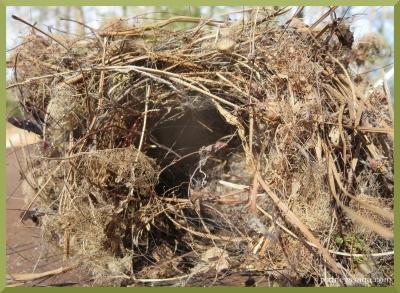 trailer nest