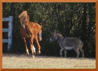 WT2 foal