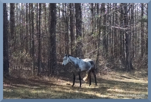 Milton pasture 2 10 15