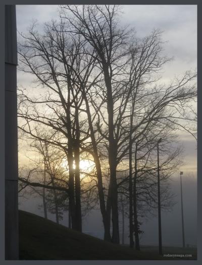 SC show tree scenery
