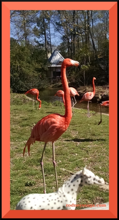 Spotted BZ flamingo