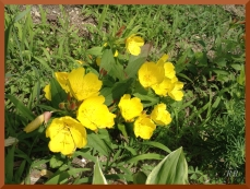 NH flowers