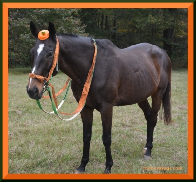 The Great Pumpkin's horse