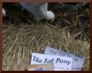 Fat Pony cov paw