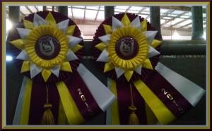 Reserve Grand Champion Adult WTC Pleasure National Finals  Reserve Grand Champion Adult WTC Equitation National Finals November 2015