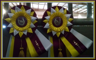 Reserve Grand Champion Adult WTC Pleasure National Finals  Reserve Grand Champion Adult WTC Equitation National Finals