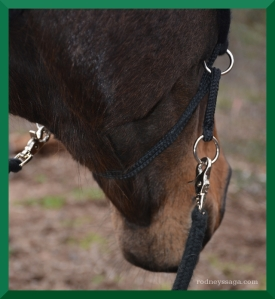 Rodney mustang bridle 3