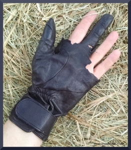 chewed glove