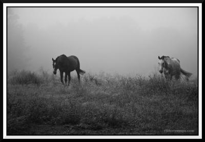 mist III