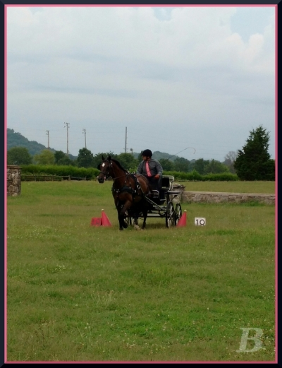 Lyricc & Greg rock the cones phase. MTCC & MTPC Schooling Driving Event Photo by Kate Bushman
