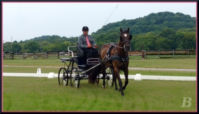 Lyricc & Greg display pleasant relaxation in the dressage phase. MTCC & MTPC Schooling Driving Event Photo by Kate Bushman