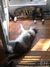 guest-cat-eh-2