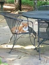 guest-cat-eh-3
