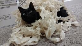 guest-cat-mmd-2