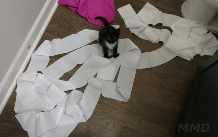 guest-cat-mmd-3