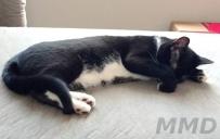 guest-cat-mmd-4