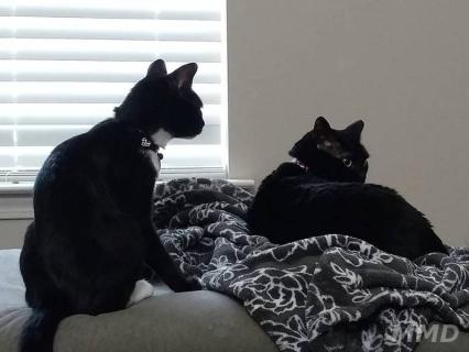 guest-cat-mmd-5