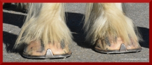 Not these hooves.