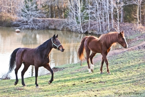 Slim, left, and Tiny, take a leisurely stroll together, seeing each other from their side vision ability.