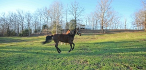 Slim gallops across the pasture, seeing in the distance ahead of her, but not the ground directly in front of her.