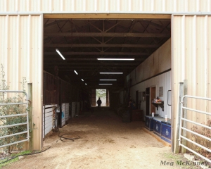 The darkened hallway of a stables may seem scary to a horse, because their eyes are slower to adjust to low lighting than a human's eyes. What they first see is a dark place, which may have predators lurking.